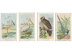 Wills's Animals and Birds 1900 4 Birds Cigarette Cards